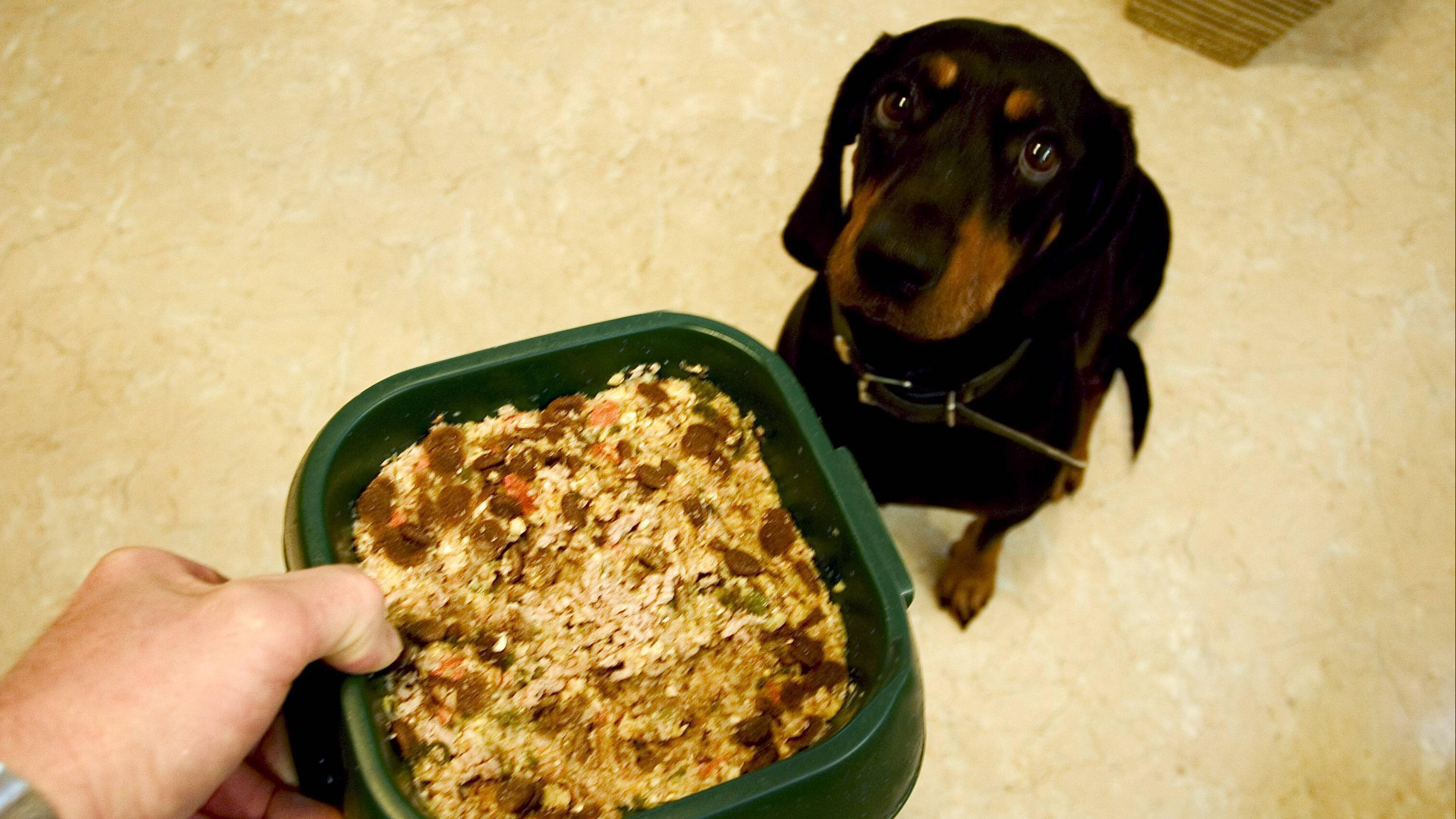 Damit er gesund bleibt, sollten Sie Ihren Hund richtig füttern.