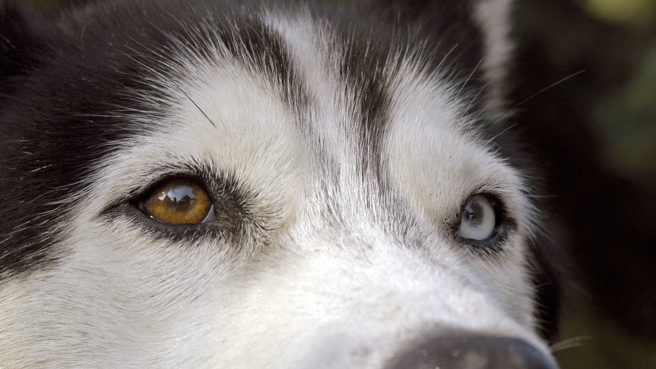 Hornhautentzündung beim Hund: Das müssen Sie wissen