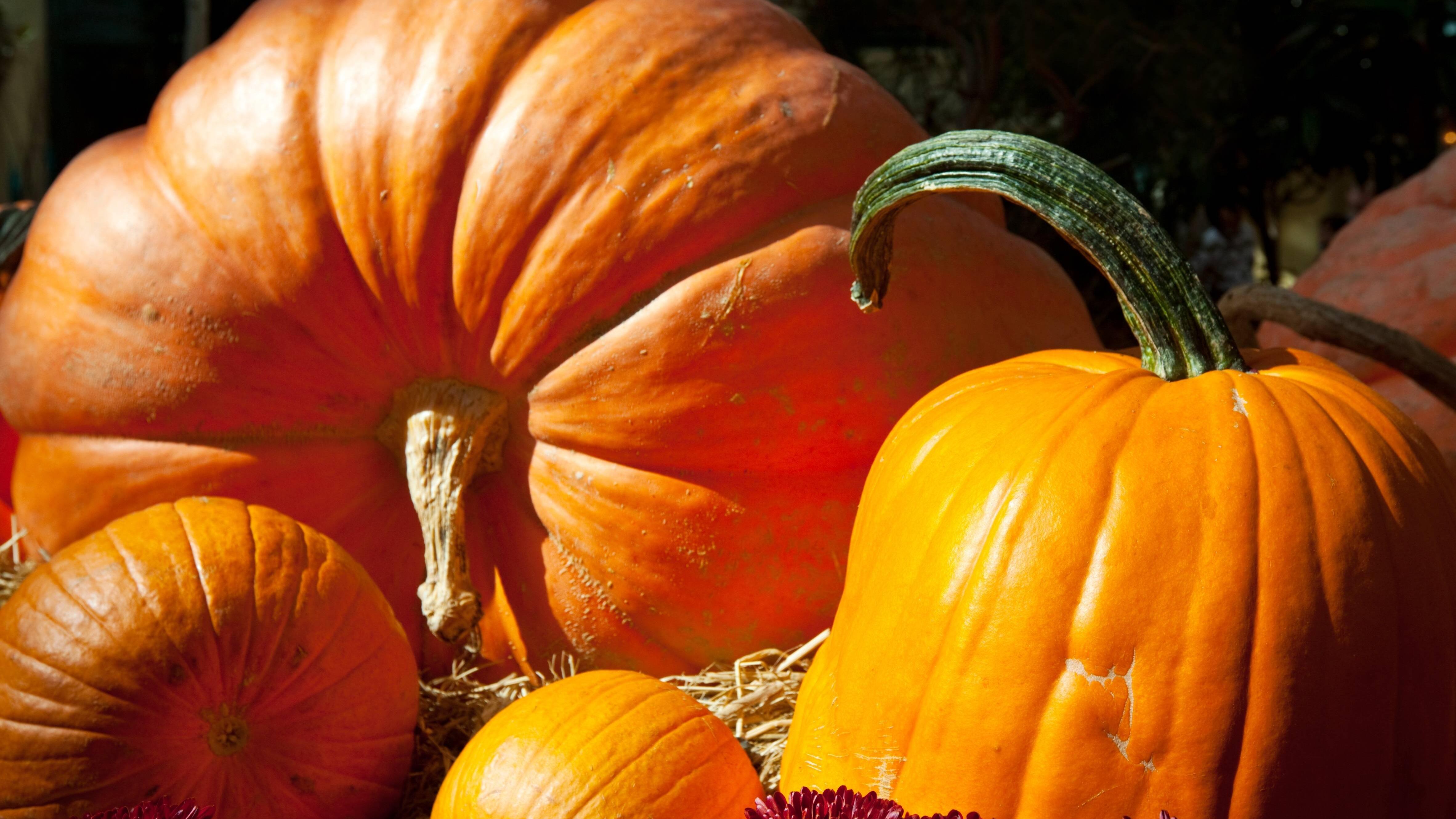 Halloween-Kürbis aushöhlen und schnitzen: Die besten Tipps und Tricks