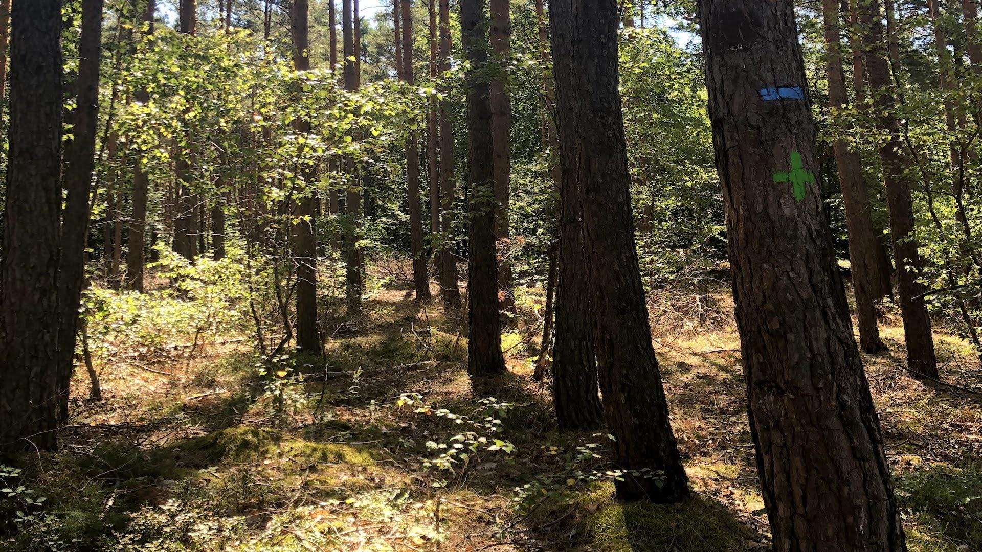 Bäume bestimmen: 3 Apps im Überblick