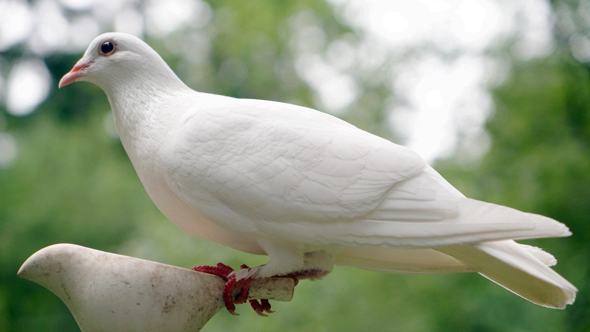 Auch die weiße Taube ist ein Symbol für den Heiligen Geist.