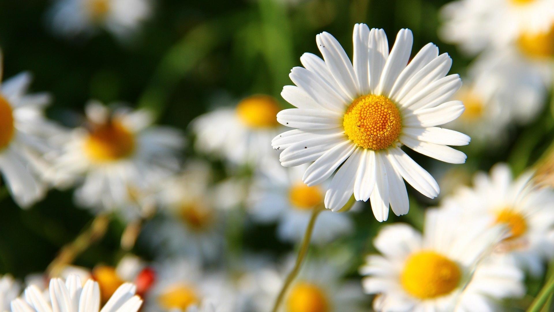 Gänseblümchen sind essbar und können auch im Winter noch geerntet werden.