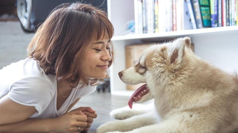Amerikanische Hunderassen: Die beliebtesten Rassen der USA