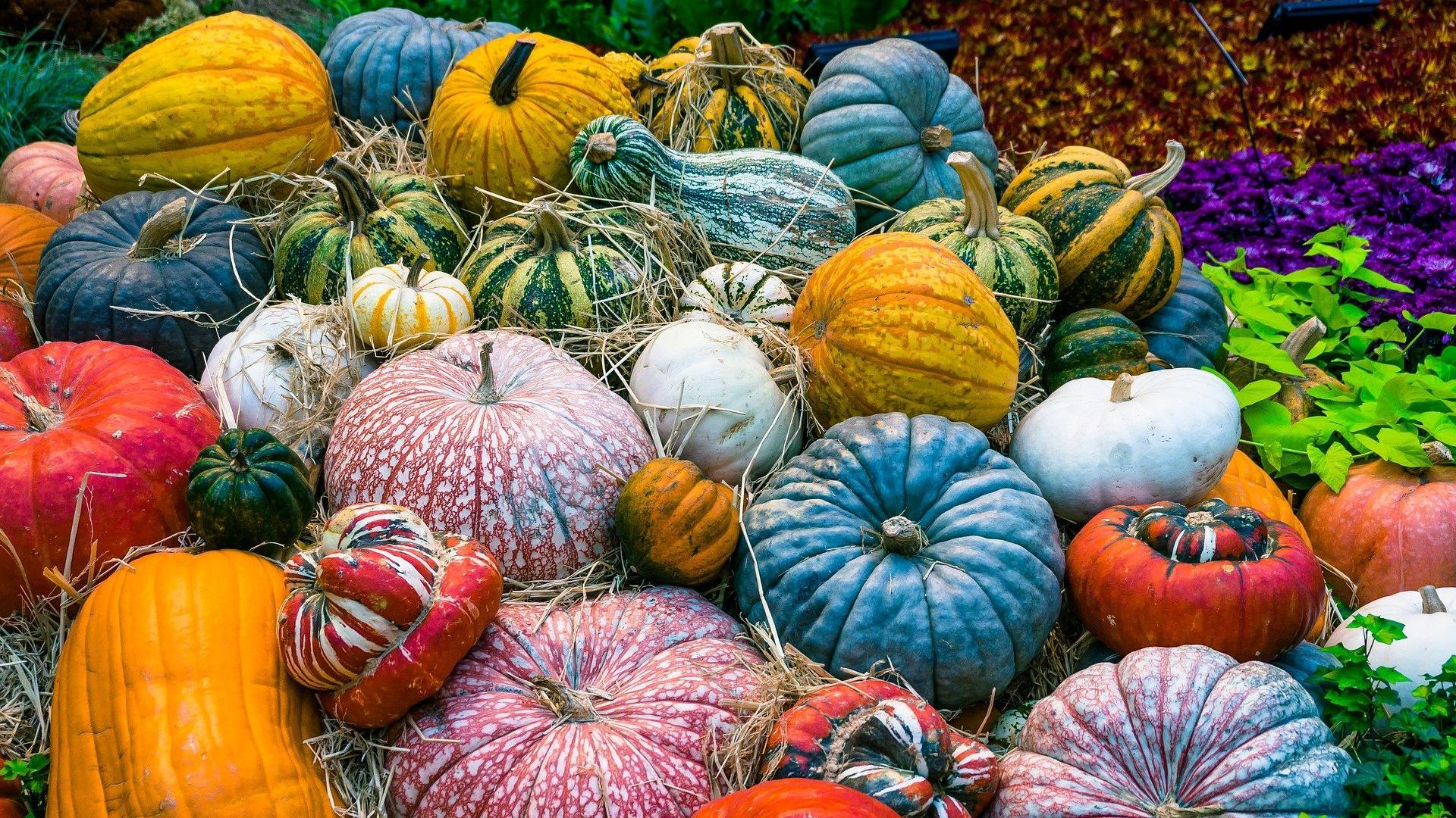 Sparen im Herbst: Diese Lebensmittel sind jetzt besonders günstig