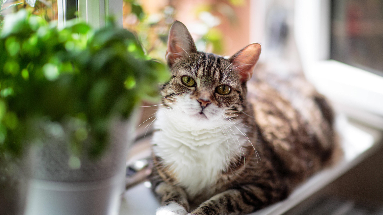 Diese Pflanzen sind für Katzen giftig