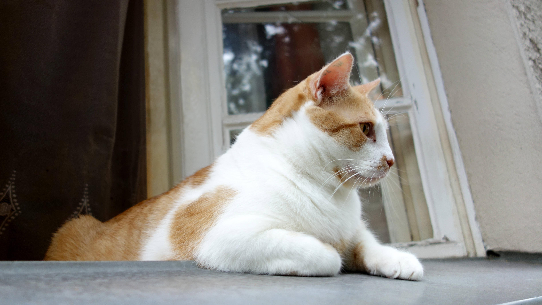 Wohnung katzensicher machen - die besten Tipps