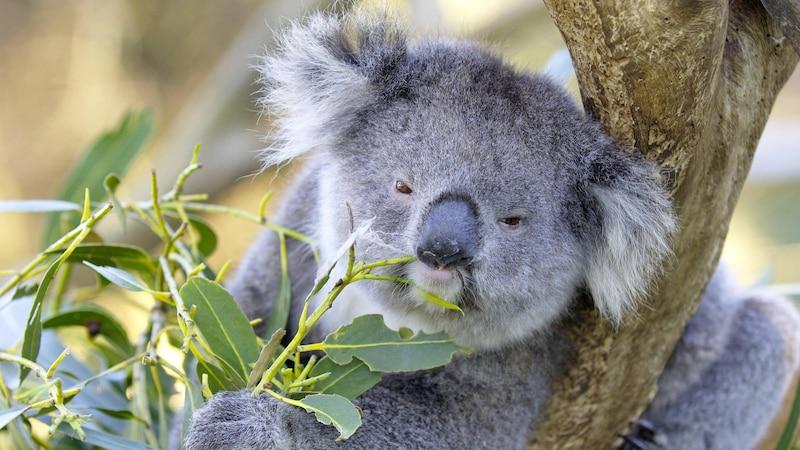 Veganes Leder lässt sich beispielsweise aus Eukalyptus herstellen.