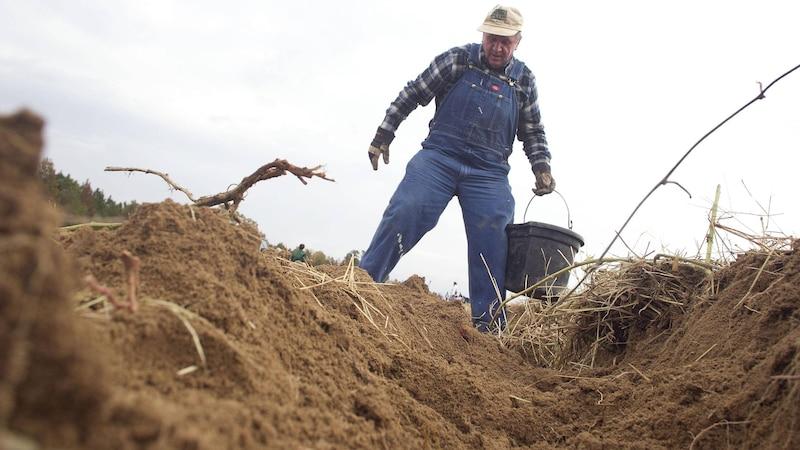 Die Definition von Bodendegradation beschreibt die Verschlechterung der Bodenqualität bis hin zum Absterben.