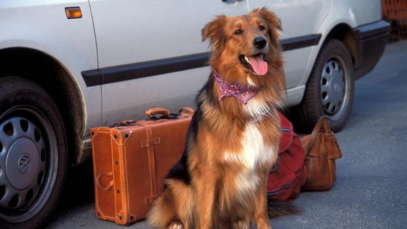 Verreisen mit Hund: Tipps und Hinweise zur Reiseplanung