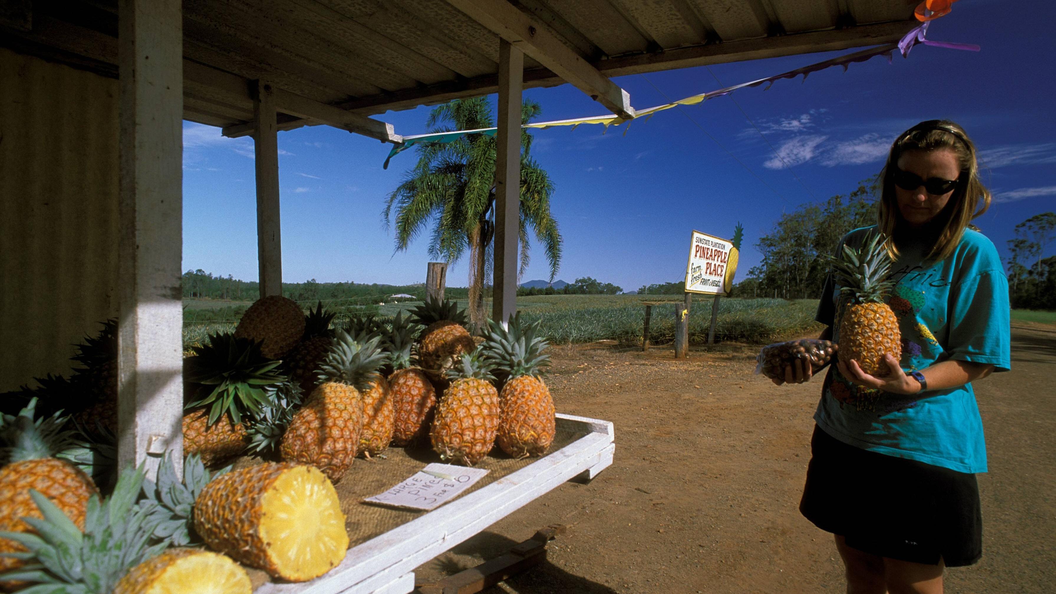 Kalorien von Ananas: Das steckt alles in der Frucht