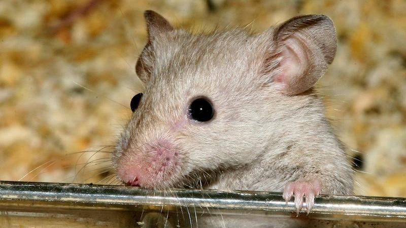Tote Maus entsorgen - Das müssen Sie beachten
