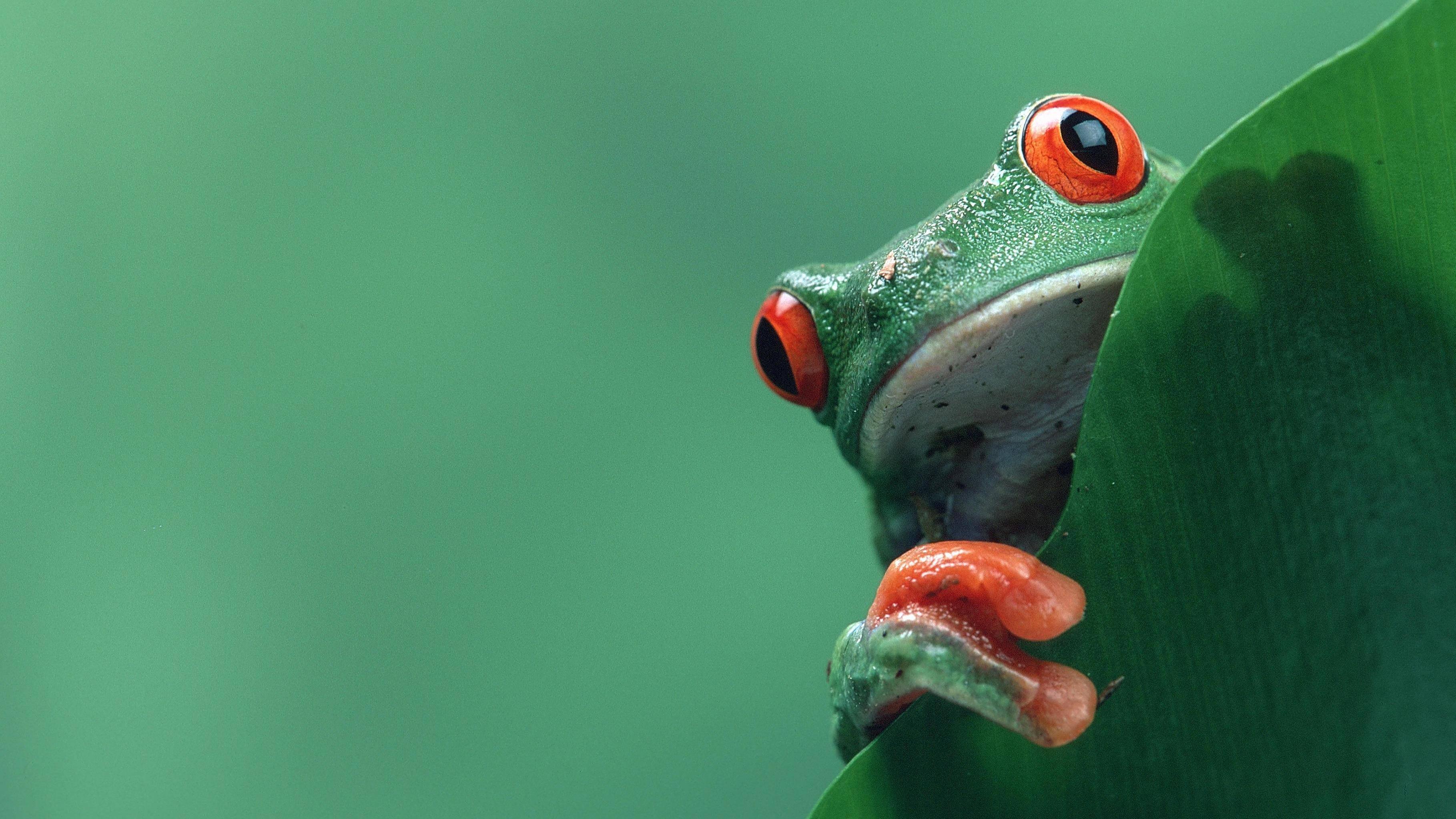 Frosch aus Geld falten: So klappt's