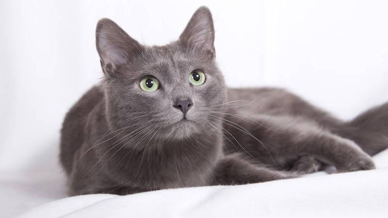 Katze verliert Fell: Ursachen und Abhilfe