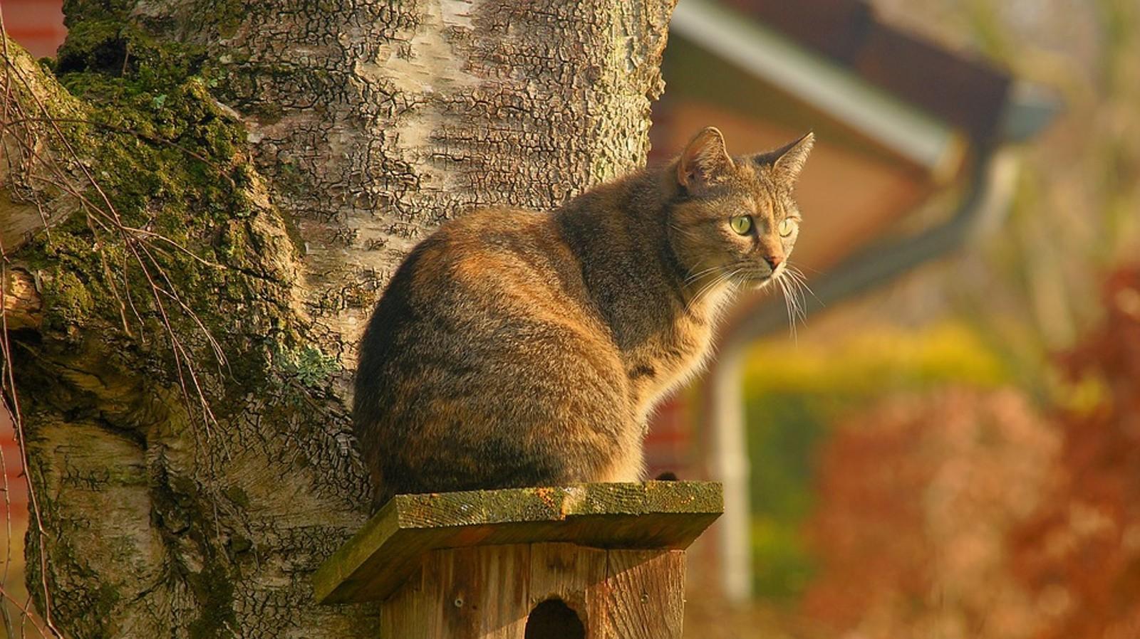 Auch wenn der Garten katzensicher ist, behalten die Vierbeiner gern den Überblick.