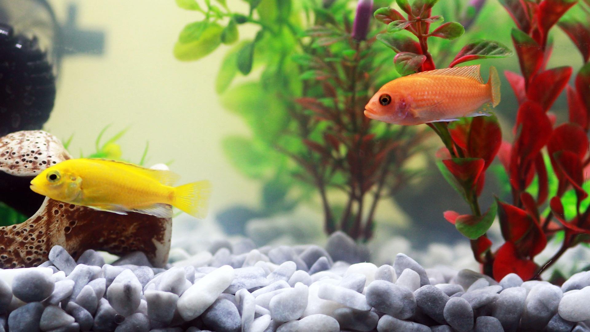 Wenn das Aquarium stinkt, können unterschiedliche Ursachen dahinterstecken