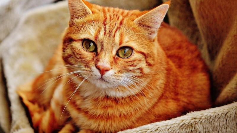 Kratzt sich eine Katze blutig, kommen oftmals viele Auslöser für den starken Juckreiz in Frage.
