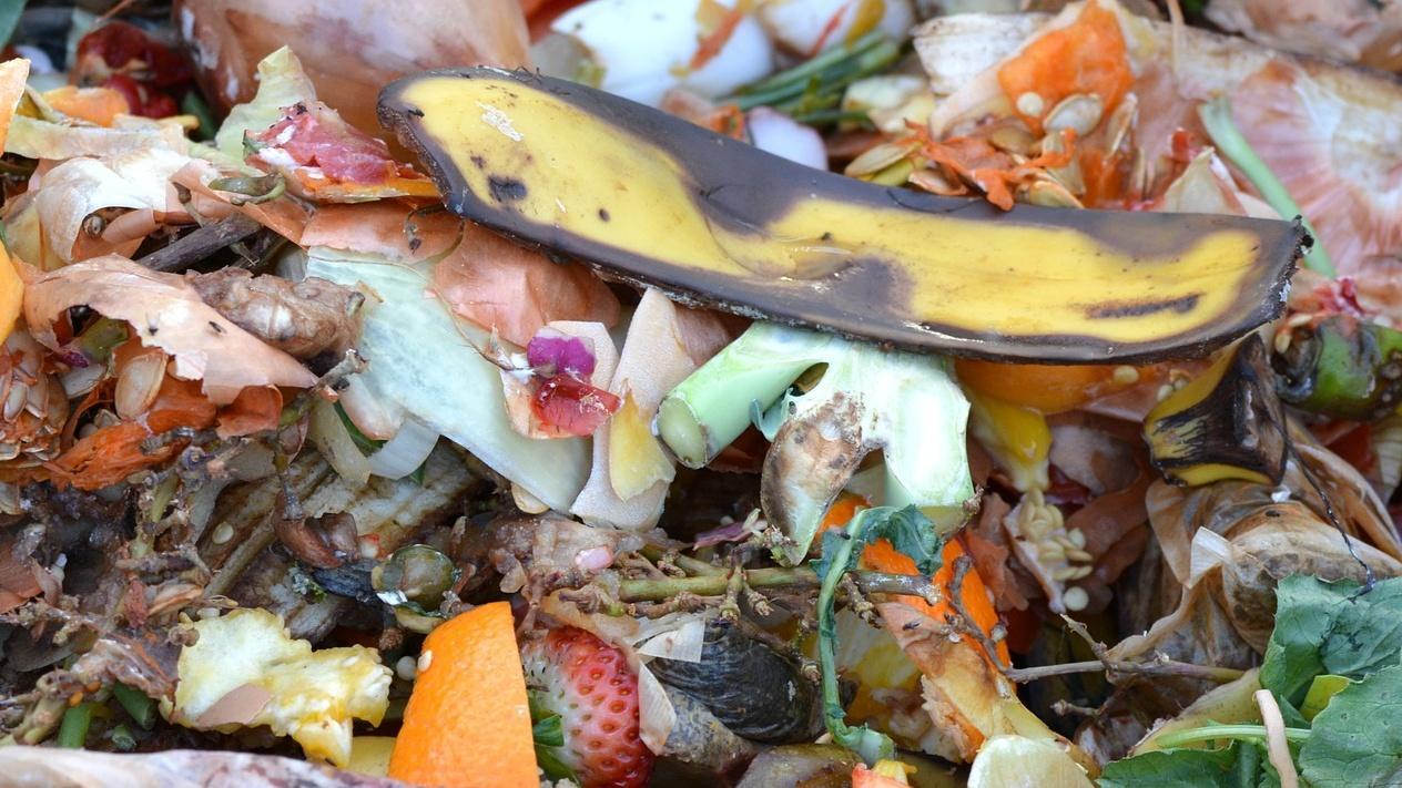 Das Kompostieren können Sie beschleunigen, indem Sie Küchenabfälle gut zerkleinern.