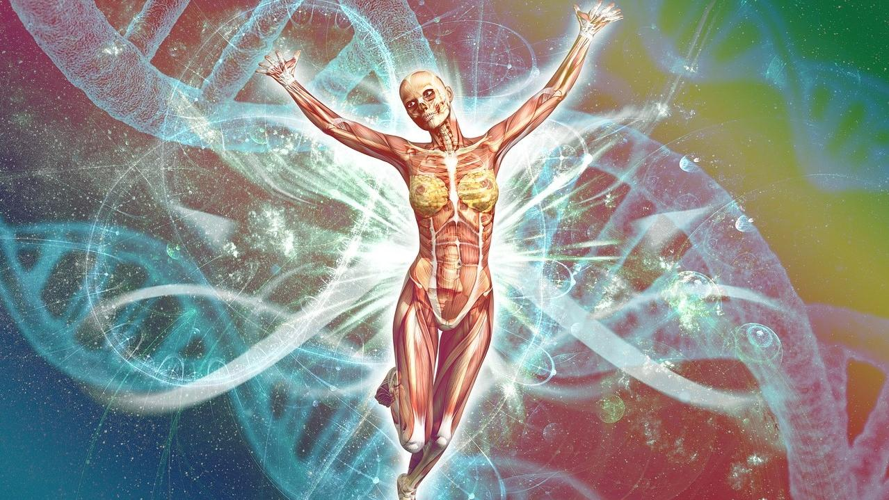 Milz: Das ist die Funktion des Organs