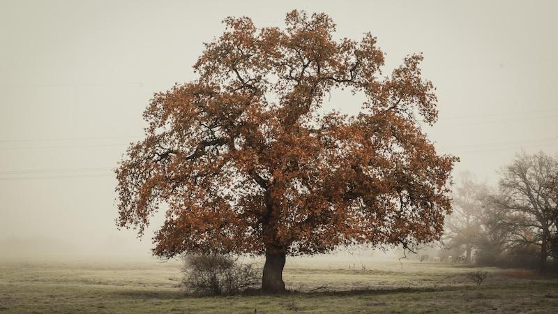 Der Lebensbaum, die Eiche, verkörpert Macht und Stärke.