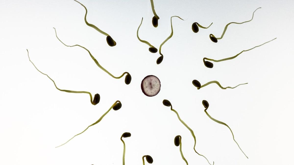 Vor dem Unterschied zwischen Embryo und Fötus wird nach der Befruchtung die Bezeichnung Zygote gewählt.