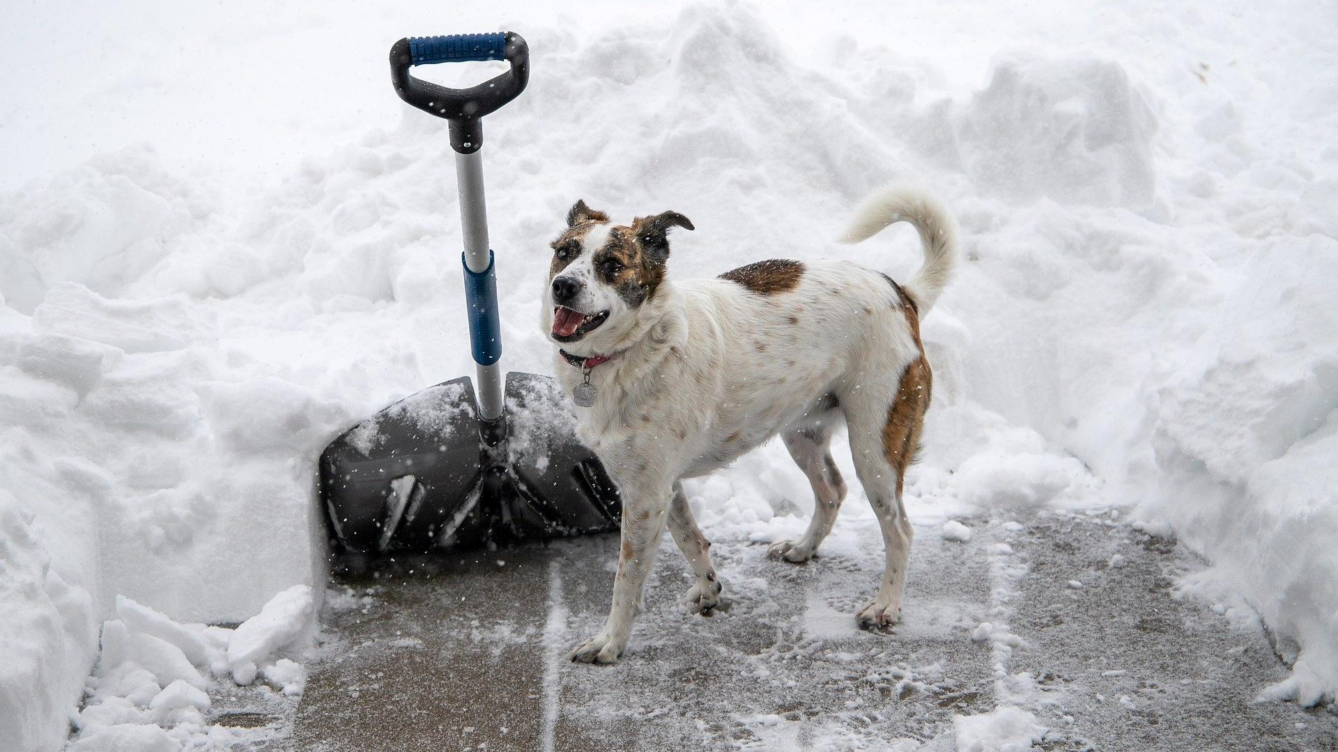 Im Winter benötigen die Pfoten des Hundes besonders viel Pflege