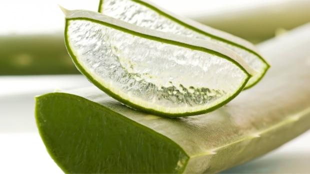 Aloe-Vera-Gel selber herstellen - so geht's