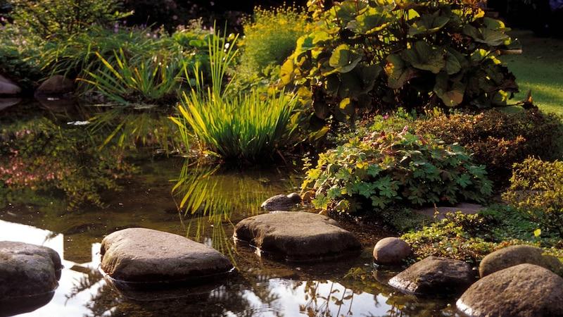 Einige Teichpflanzen müssen zum Überwintern umgesetzt werden.