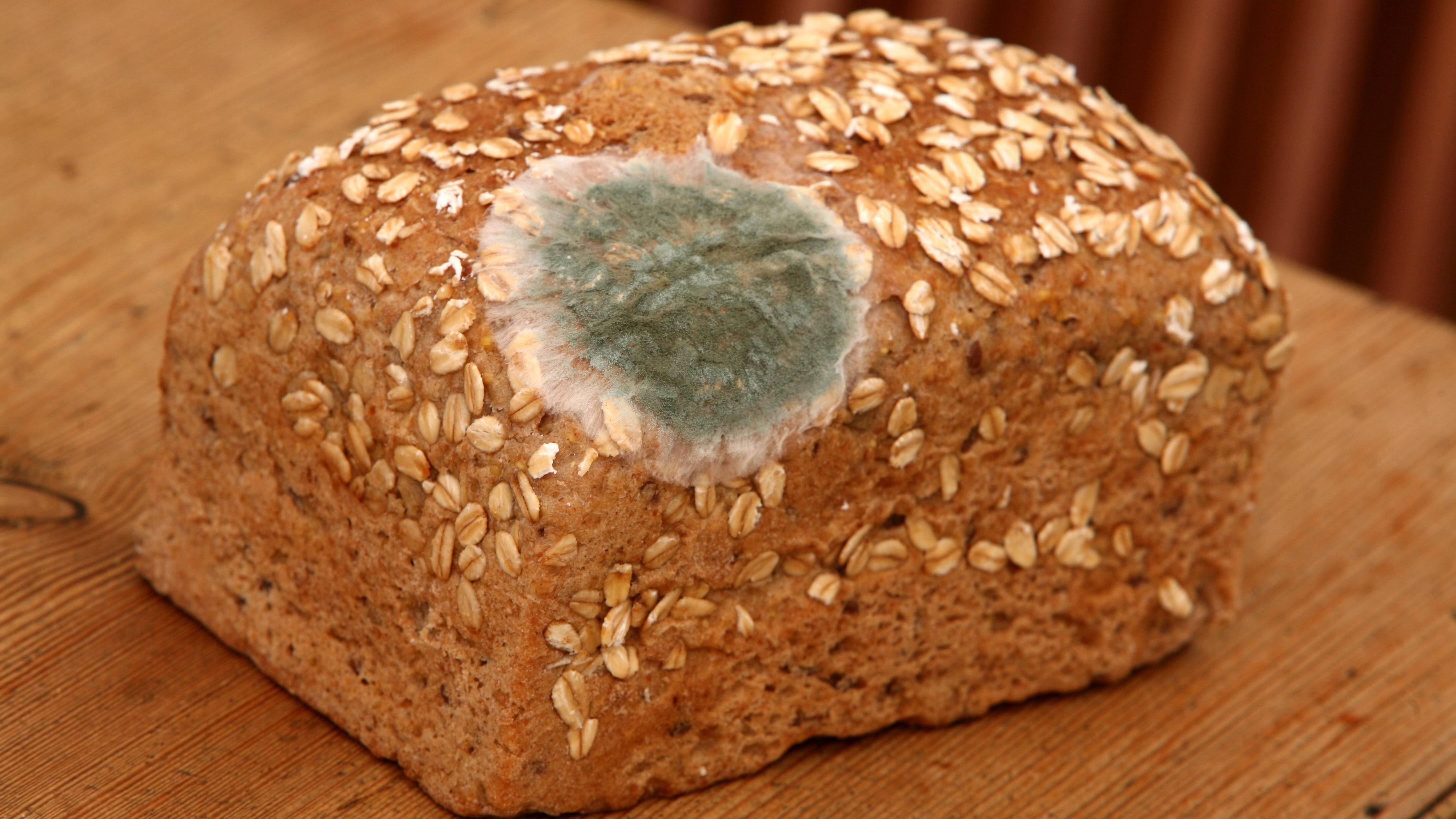 Brot mit Schimmel gegessen: Das müssen Sie wissen