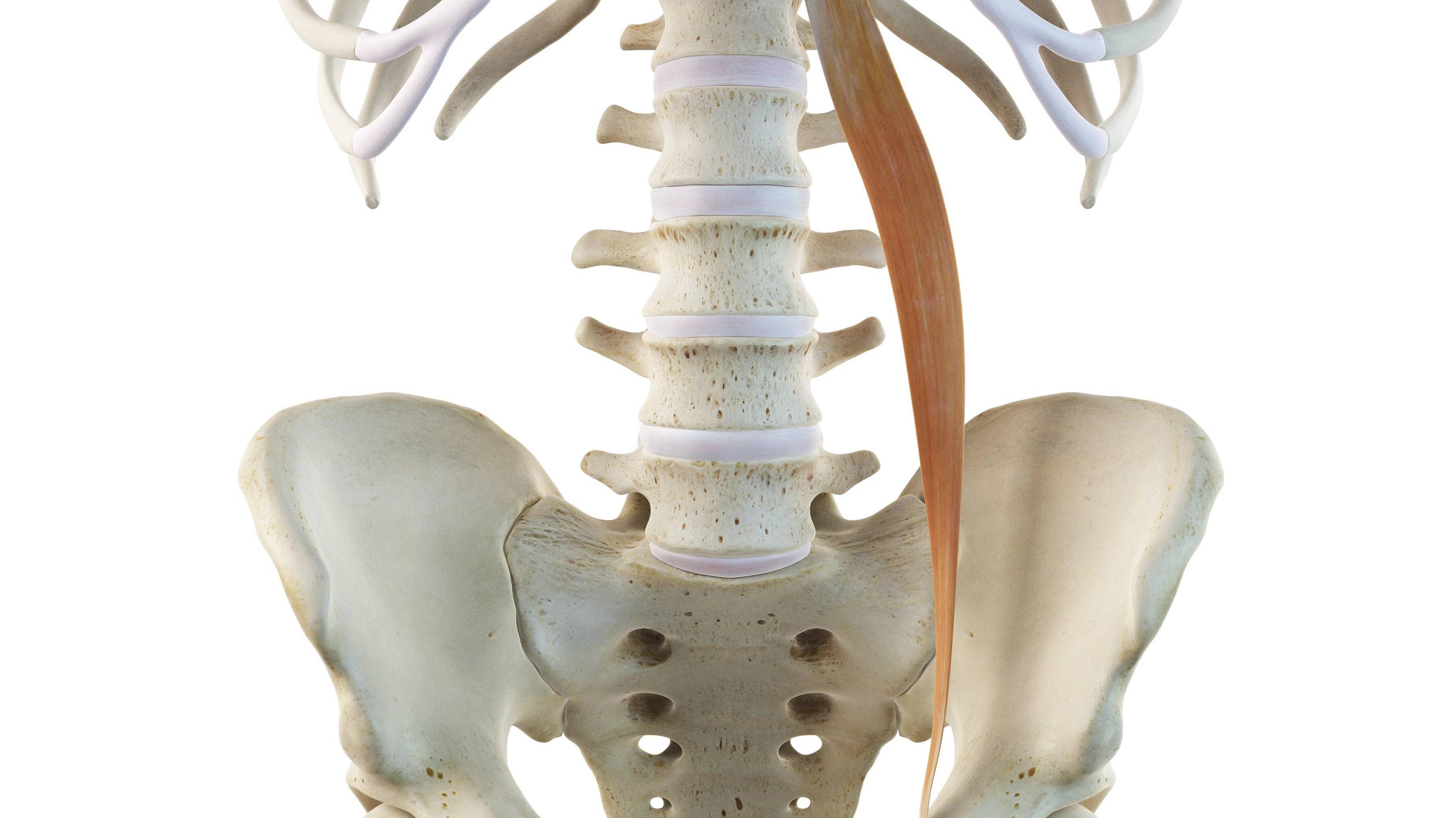 Psoas-Muskel: Bedeutung und Training des Seelenmuskels