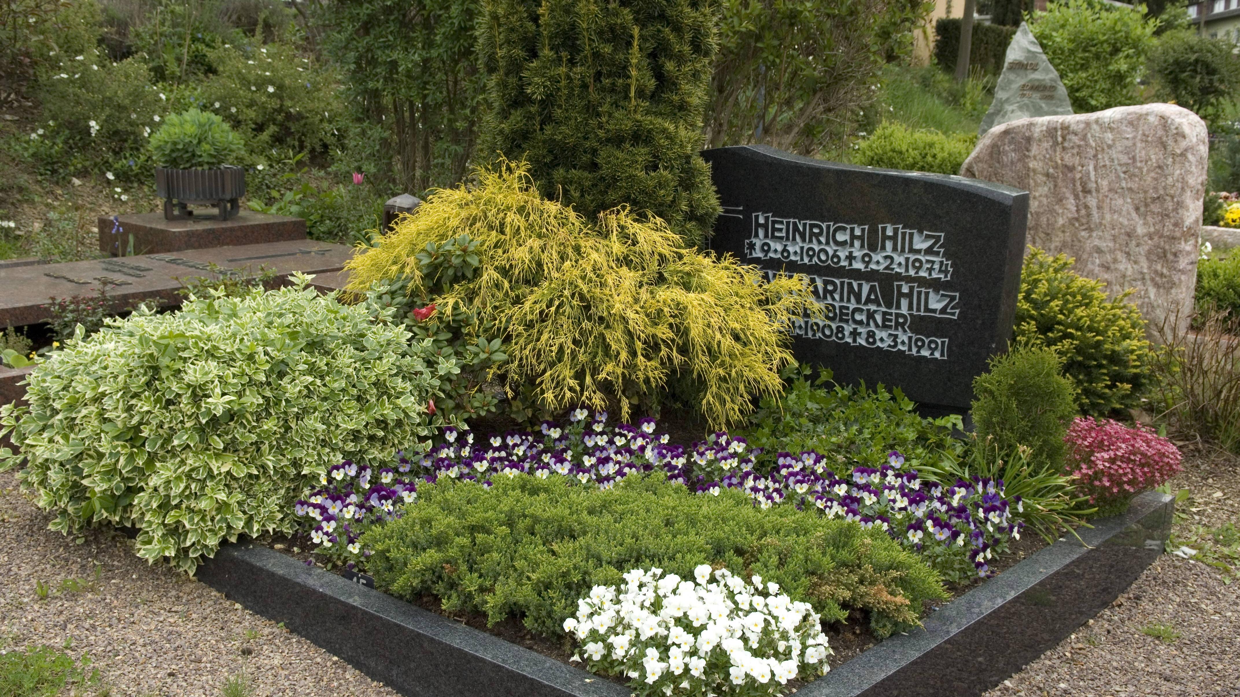 Grab-Pflanzen, die wenig Wasser brauchen: Die Top 10