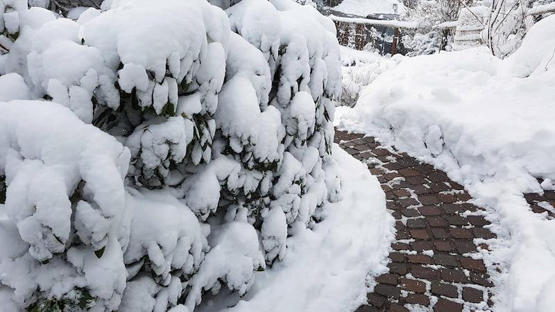 Bäume sollten Sie im Winter nicht schneiden, da Sie ihnen so großen Schaden zufügen können.