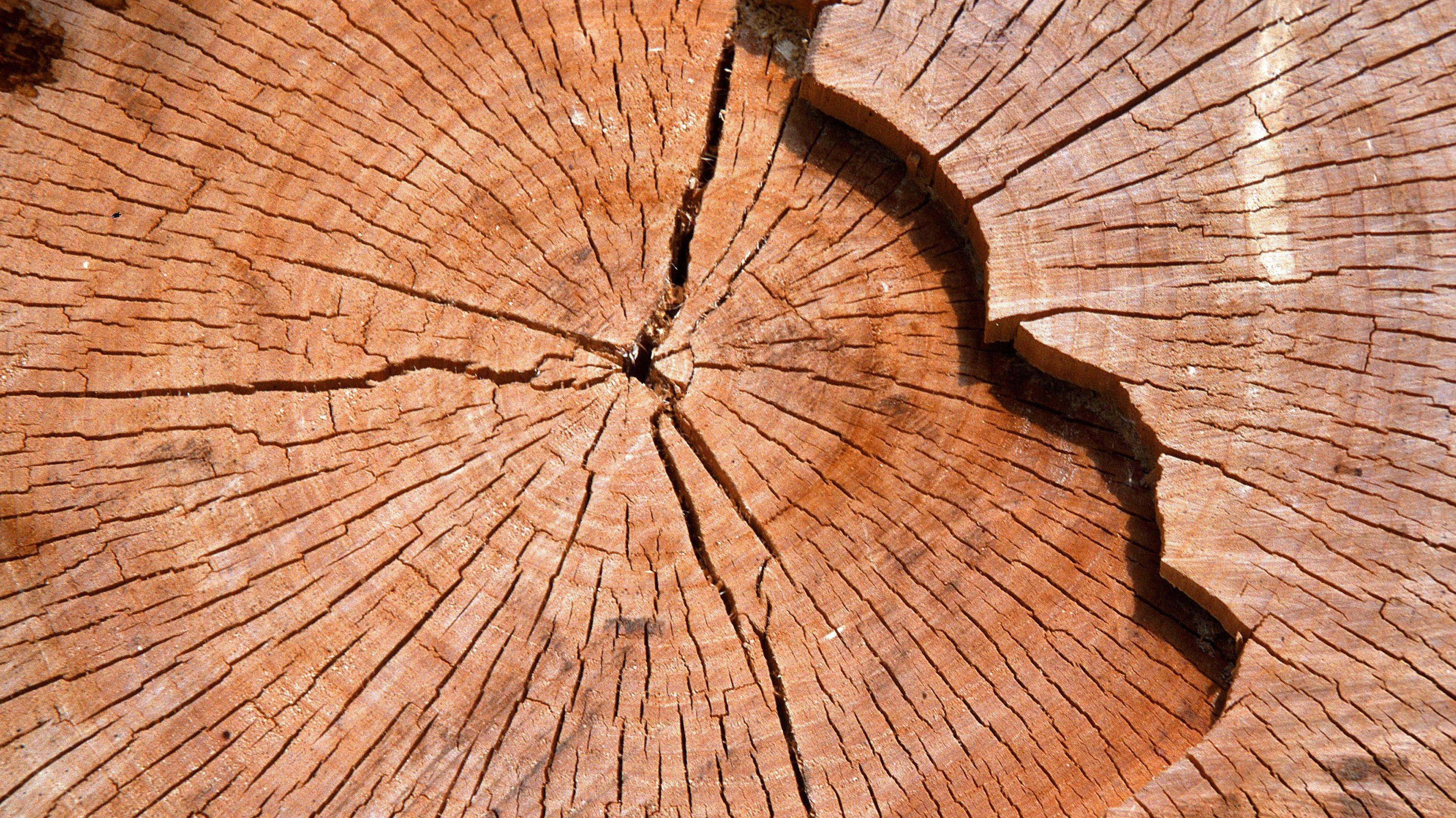 Baumscheibe bepflanzen: Das müssen Sie beachten
