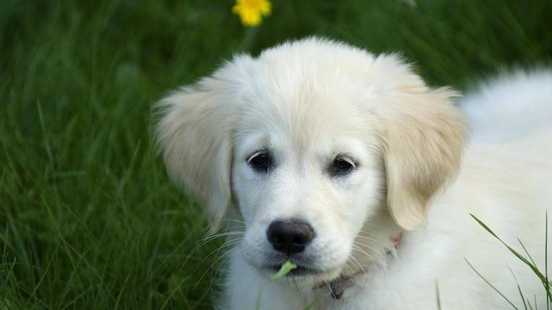 Nachbar: Hund bellt dauernd - Wie Sie sich verhalten können