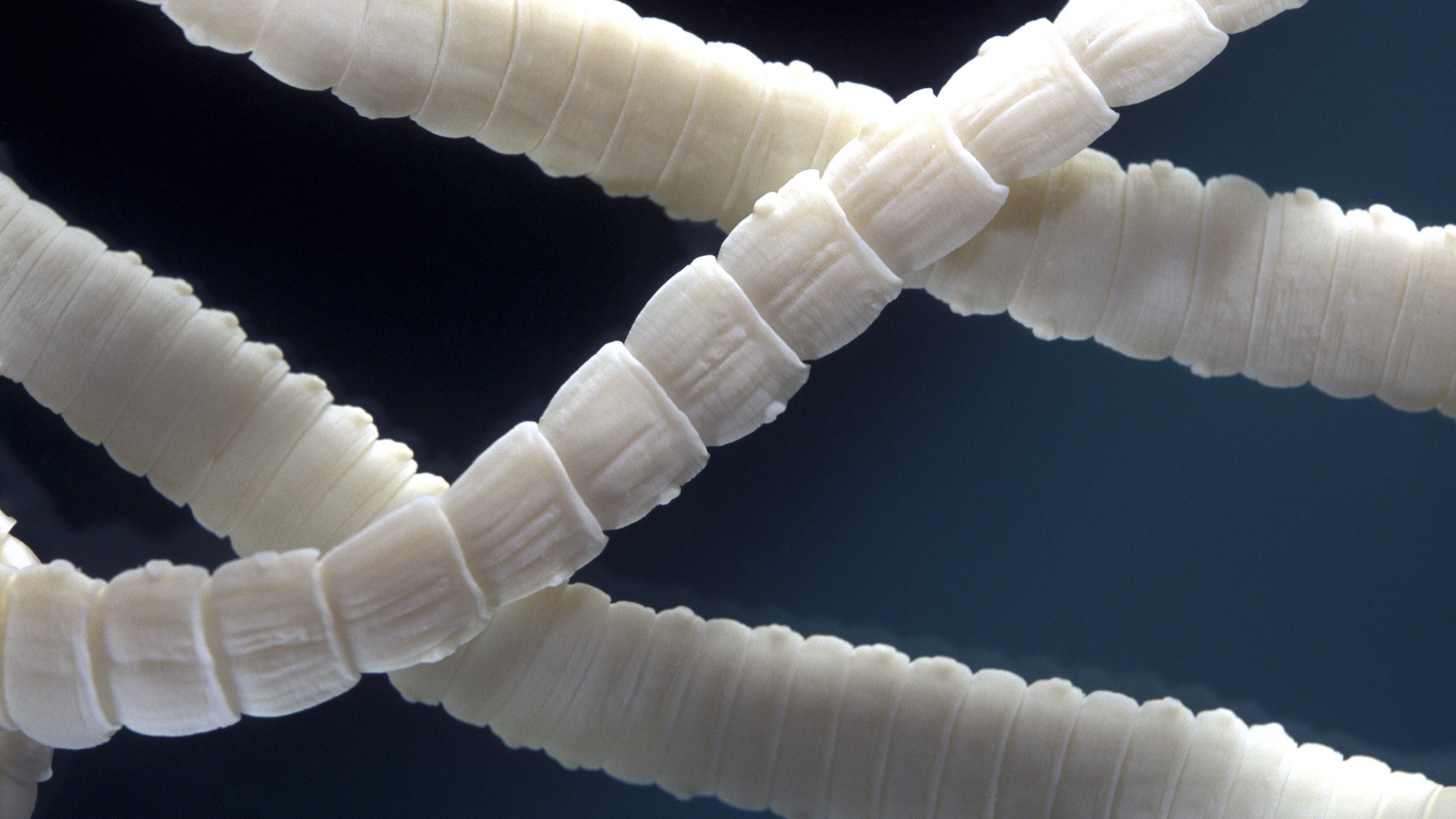 Milben und Parasiten haben für Ihren Hamster fiese Nebenwirkungen