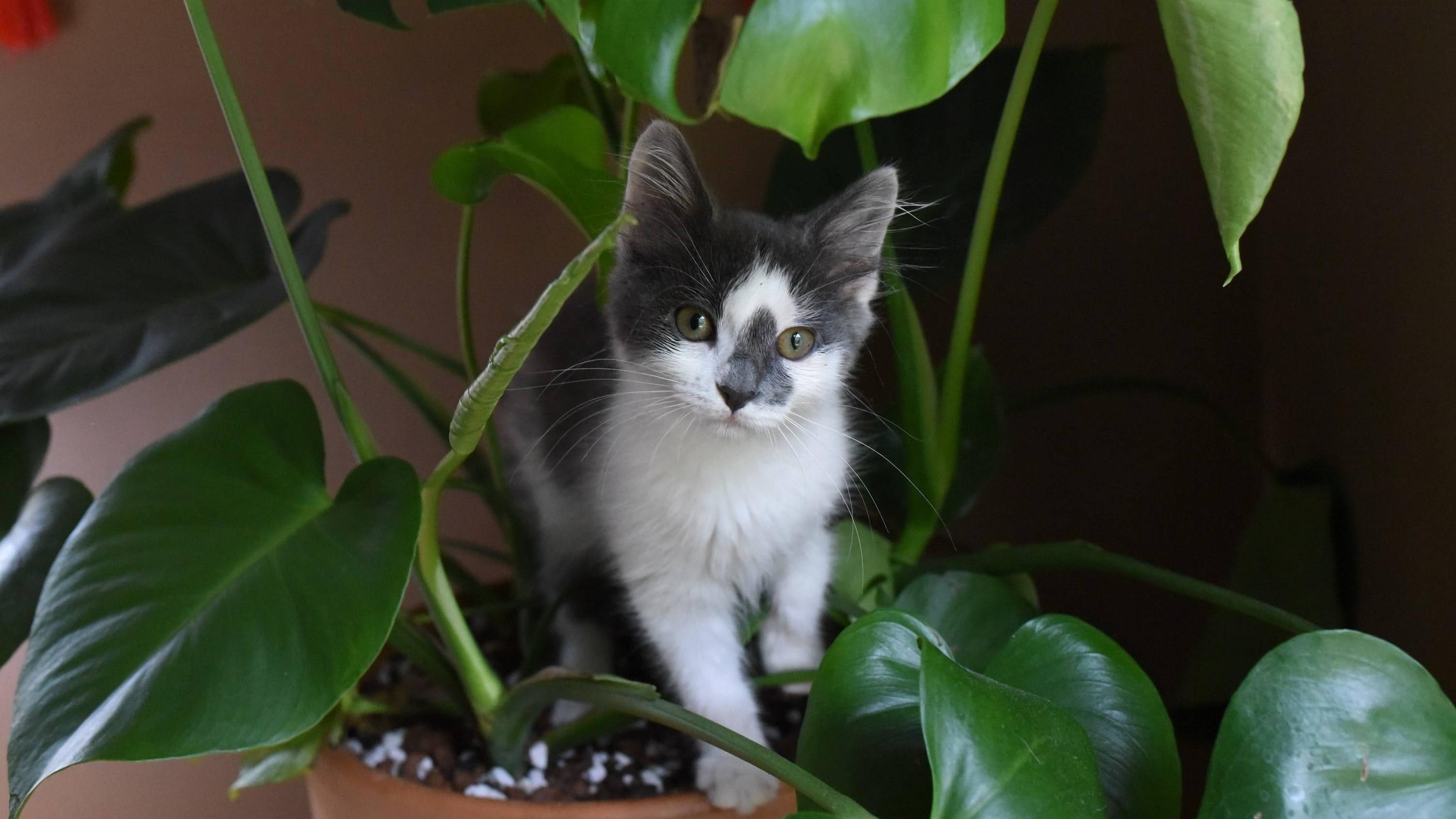 Pflanzen vor Katzen schützen - Tipps und Tricks