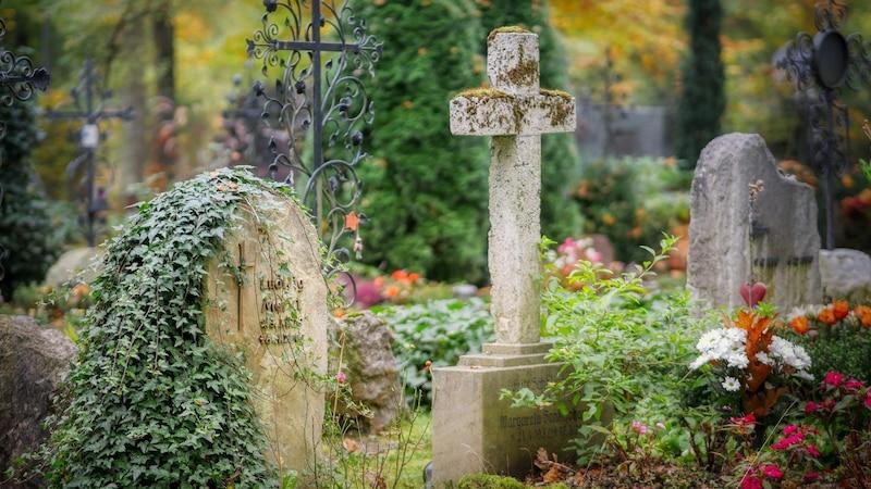 Grab bepflanzen: 5 schöne Ideen