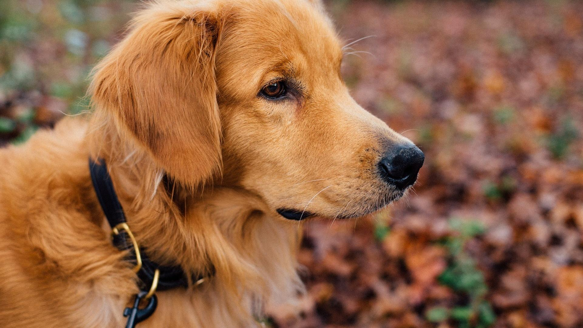 Verschiedene Verhaltensweisen eines Hundes können auf die Notwendigkeit einer Verhaltenstherapie aufmerksam machen.