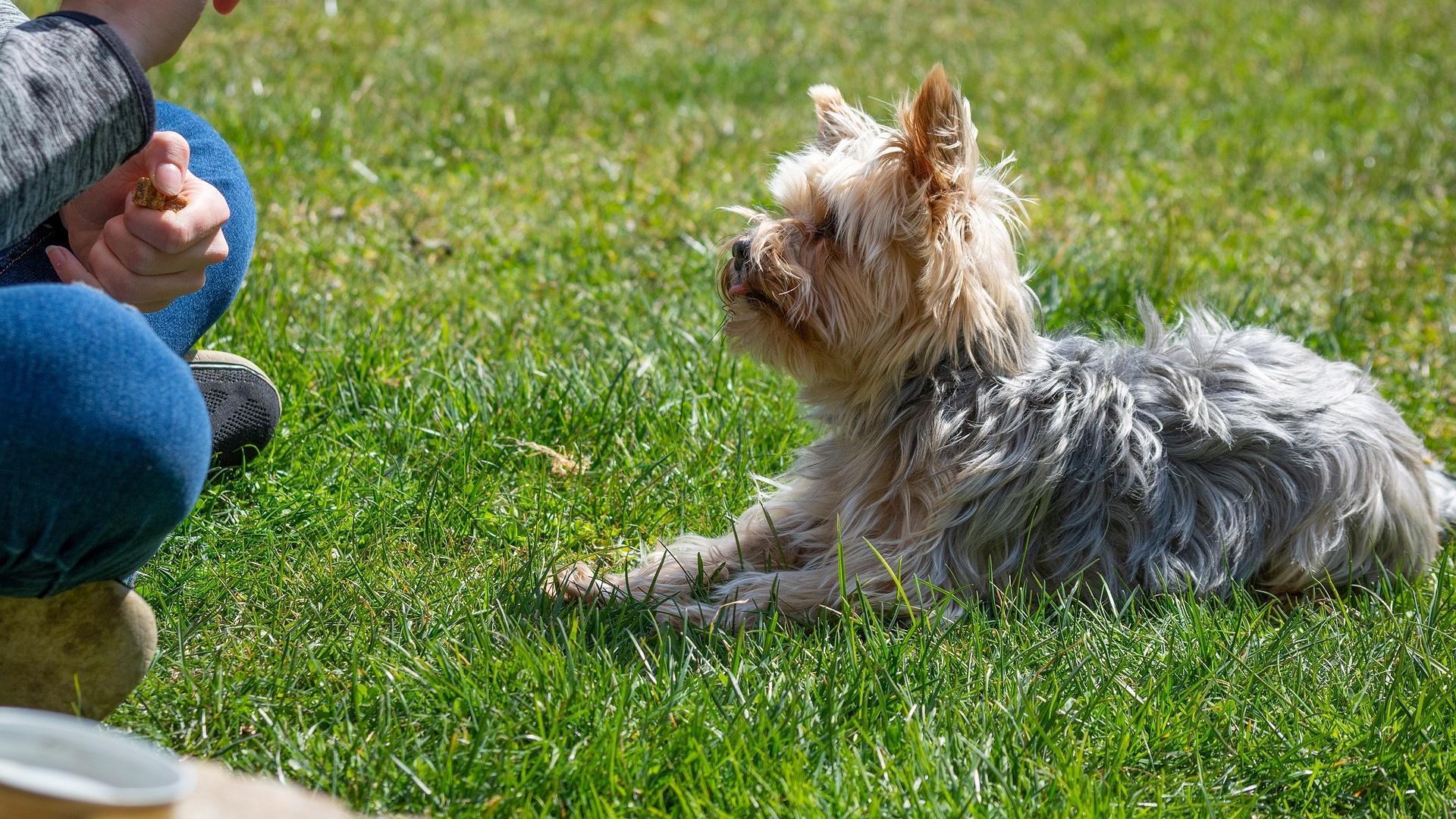 Durch die Impulskontrolle lernt der Hund, seine Reize zu kontrollieren.