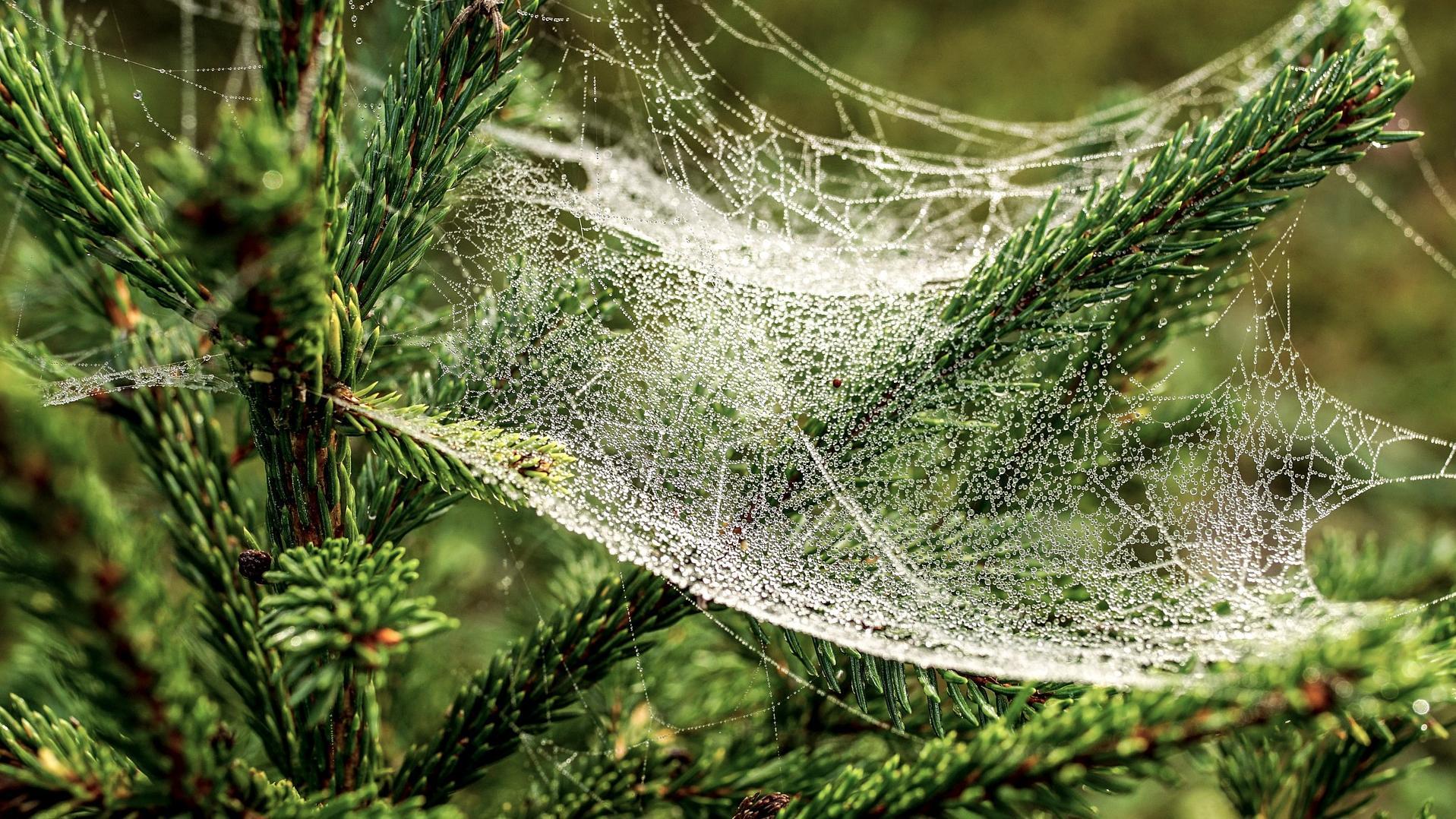 Das Spinnennetz ist in der Ukraine eine traditionelle Weihnachtsdekoration