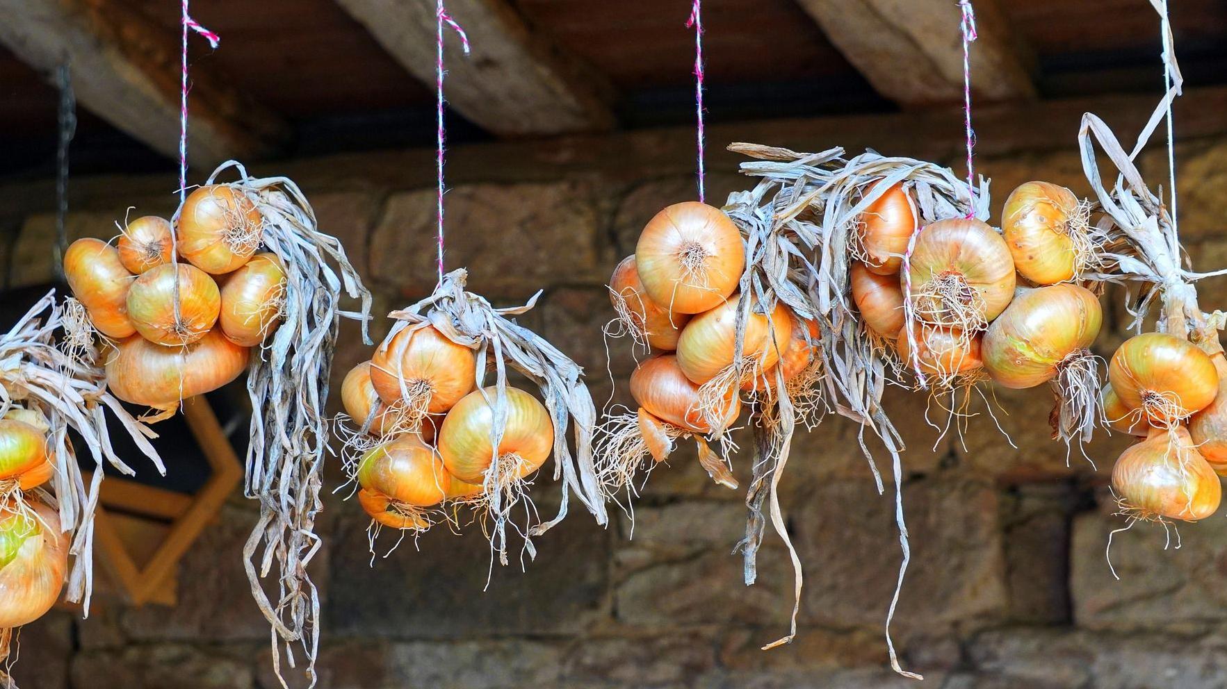 Zwiebeln einfrieren - so geht's