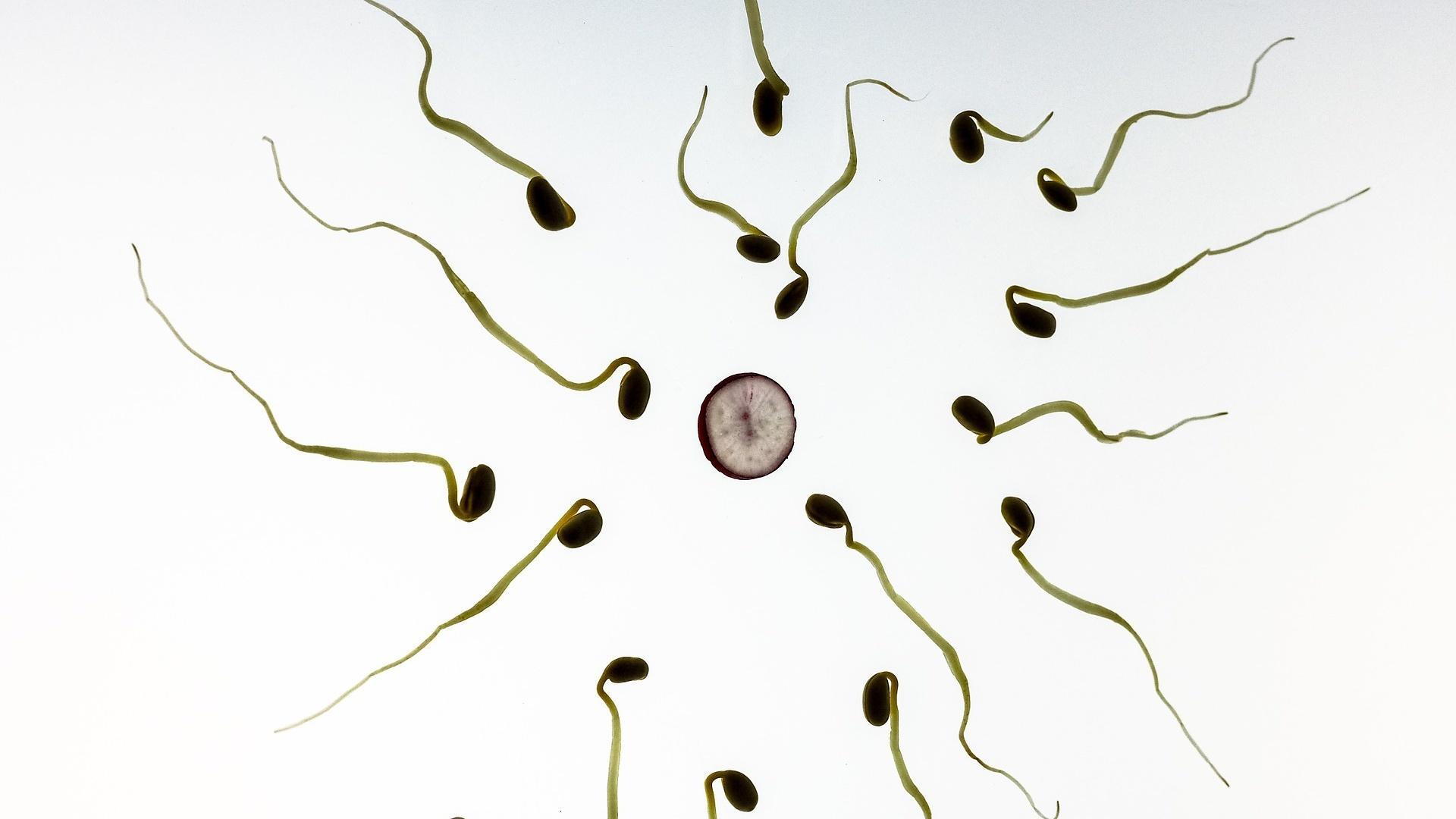 So lässt sich das Geschlecht des Babys beeinflussen - zumindest ein wenig.