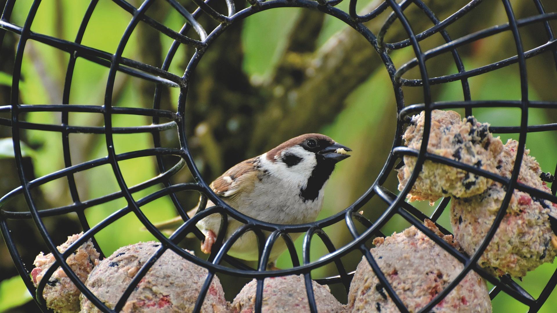 Bei der Fütterung von Vögeln auf dem Balkon sollten Sie einige Dinge beachten.
