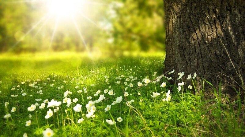 Mit den passenden Gewächsen lassen sich auch Baumscheiben bepflanzen.