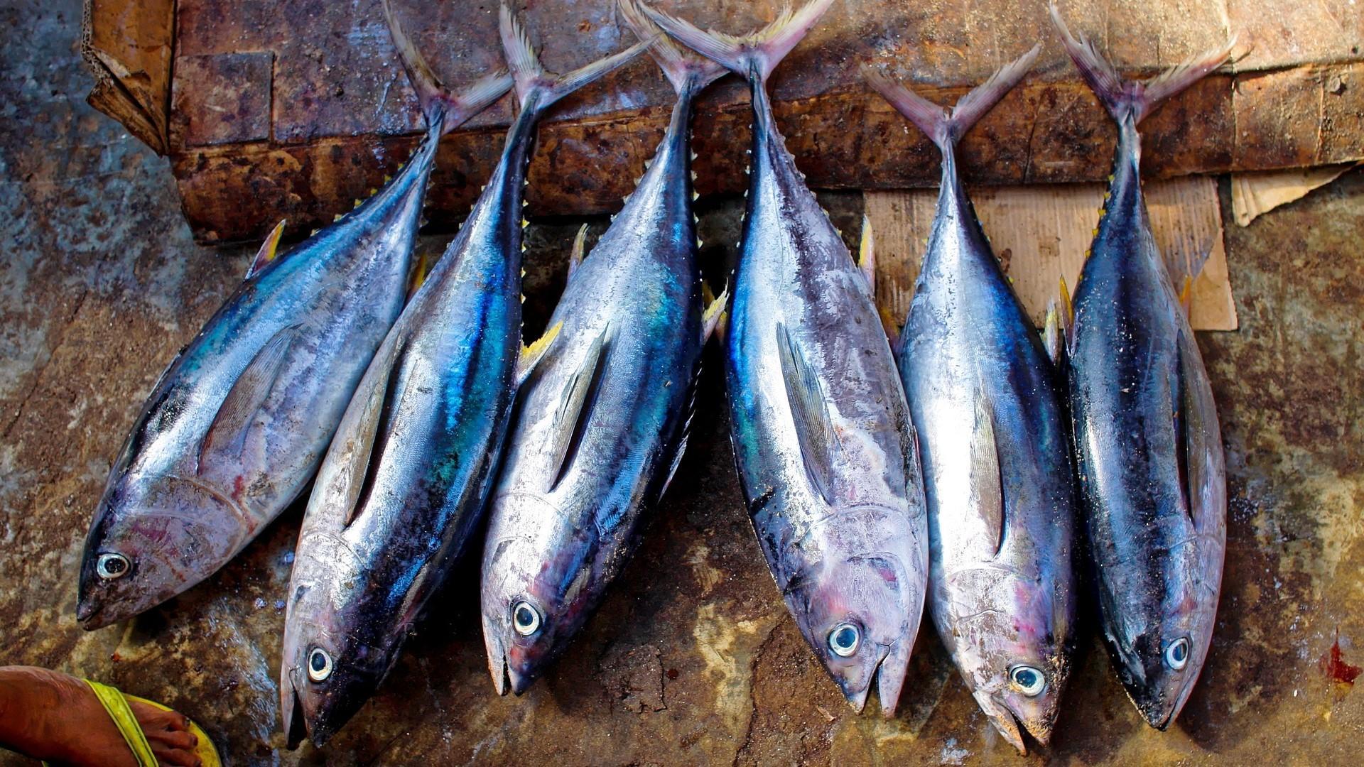 Thunfisch roh essen - das müssen Sie wissen