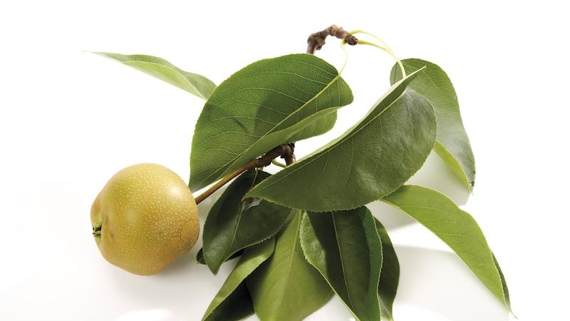 Nashi-Birne ist gesund: Asiatisches Obst im Check