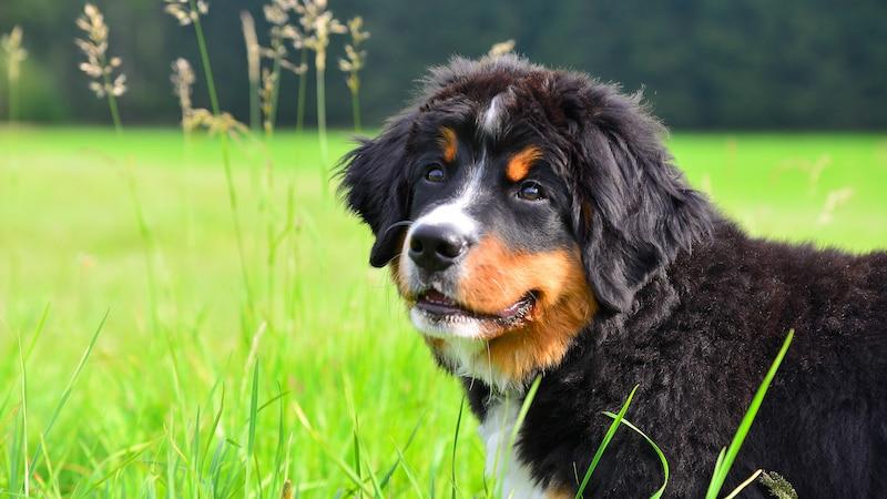Kreuzbandriss beim Hund: Symptome und Behandlung