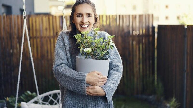 Pflanzen transportieren: So ziehen Sie mit Ihren Pflanzen um