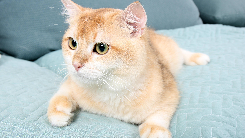 Katzengeburt: Infos zu Anzeichen, Ablauf und Dauer