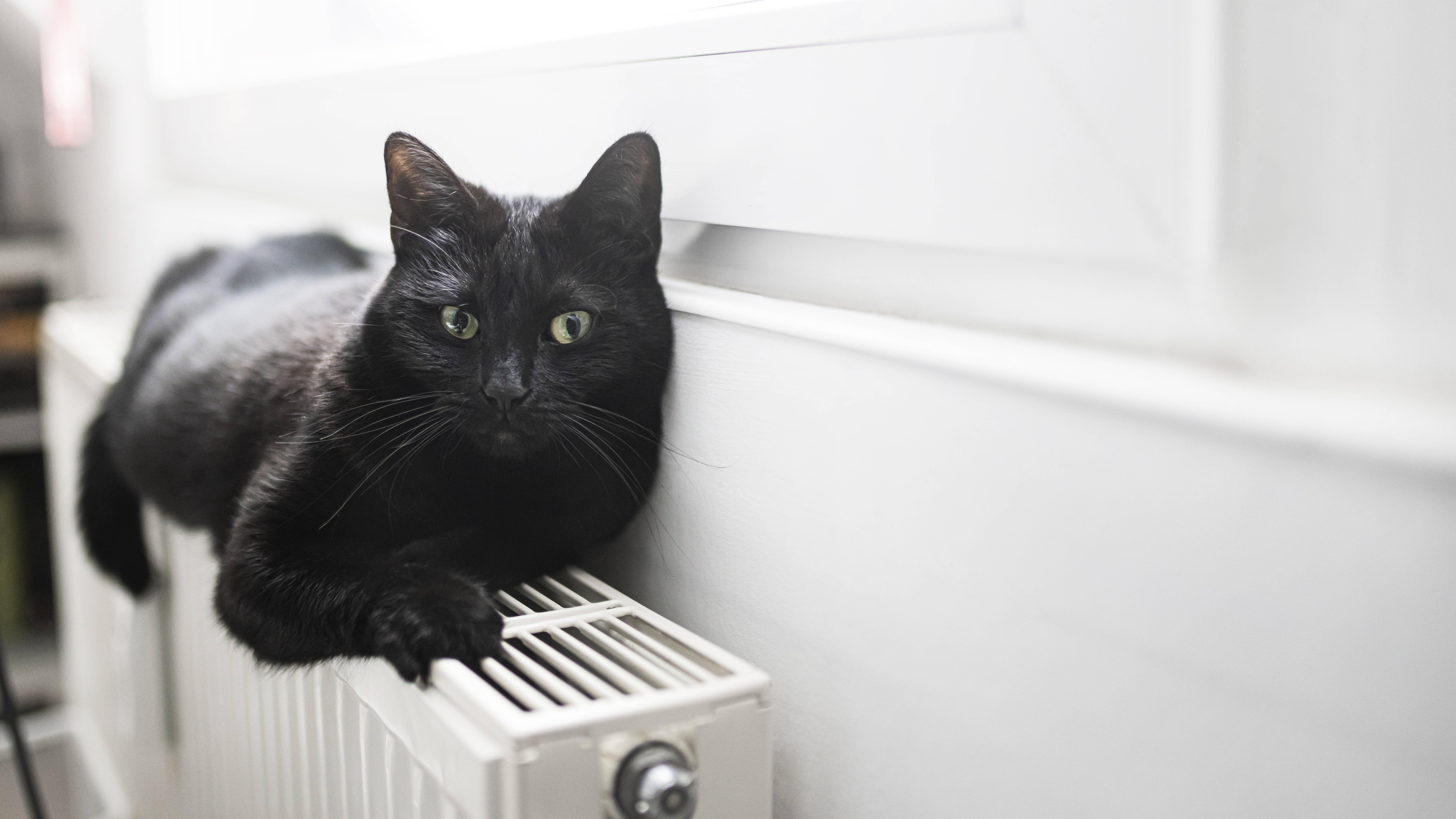 Schwarze Katze von links: Daher kommt der Aberglaube