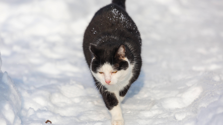 Katze friert: Wie Sie es erkennen und was Sie dagegen tun können